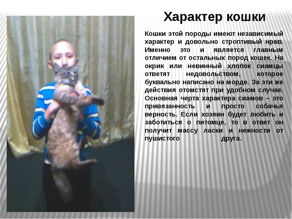 Характер кошки Кошки этой породы имеют независимый характер и довольно стропт...