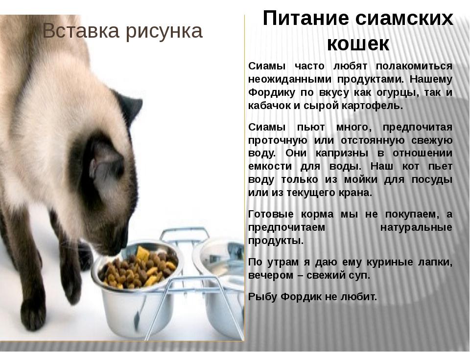Питание сиамских кошек Сиамы часто любят полакомиться неожиданными продуктами...