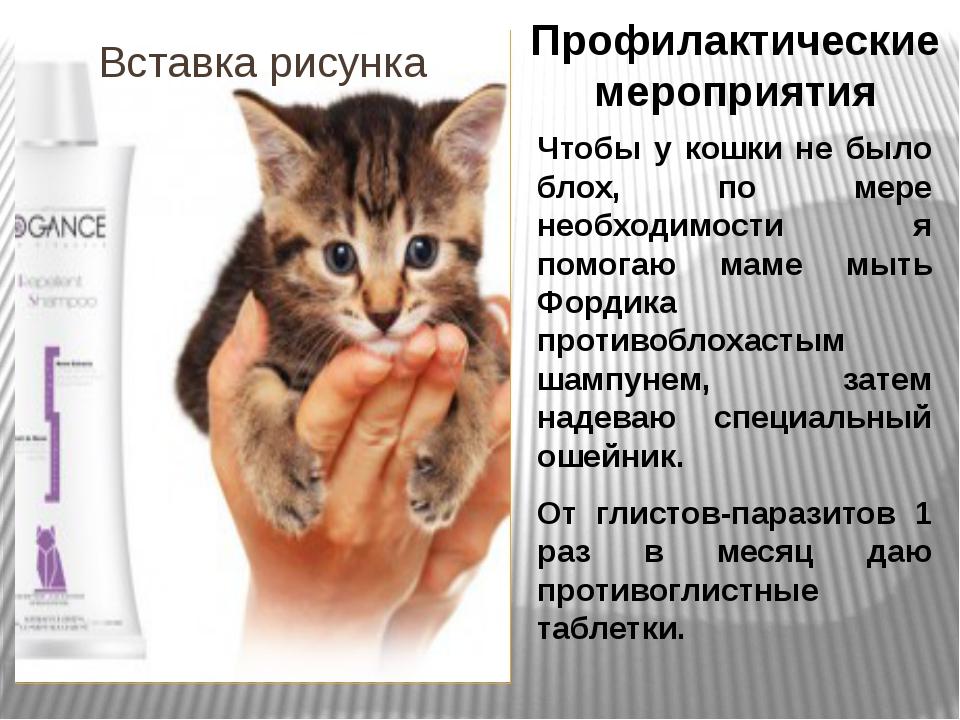 Профилактические мероприятия Чтобы у кошки не было блох, по мере необходимост...