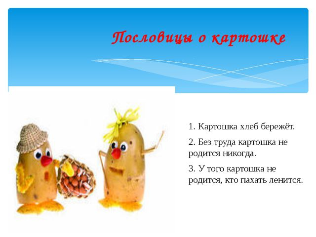 Пословицы о картошке 1. Картошка хлеб бережёт. 2. Без труда картошка не роди...