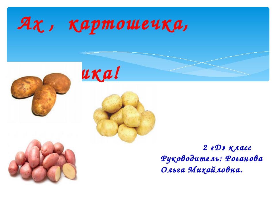 Ах , картошечка, картошка! 2 «Д» класс Руководитель: Роганова Ольга Михайлов...