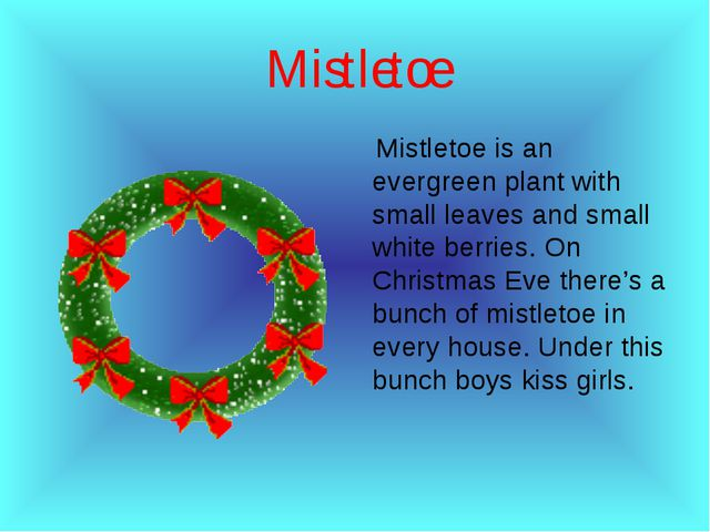 Мistletoe Мistletoe is an evergreen plant with small leaves and small white b...