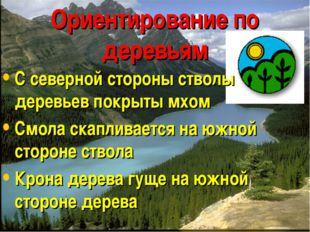 Ориентирование по деревьям С северной стороны стволы деревьев покрыты мхом См