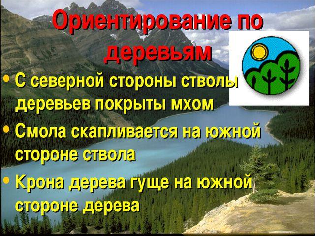 Ориентирование по деревьям С северной стороны стволы деревьев покрыты мхом См...