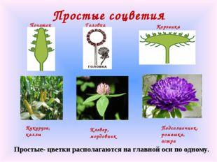 Простые соцветия Кукуруза, каллы Початок Подсолнечник, ромашка, астра Корзинк