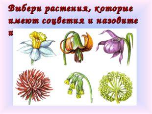 Выбери растения, которые имеют соцветия и назовите их. соцветия