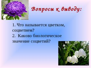 Вопросы к выводу: 1. Что называется цветком, соцветием? 2. Каково биологическ