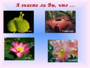 А знаете ли Вы, что … Ряска Раффлезия Лотос Орхидея