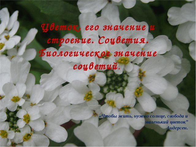 Цветок, его значение и строение. Соцветия. Биологическое значение соцветий. «...