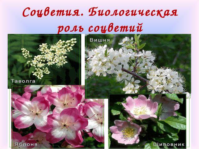 Соцветия. Биологическая роль соцветий