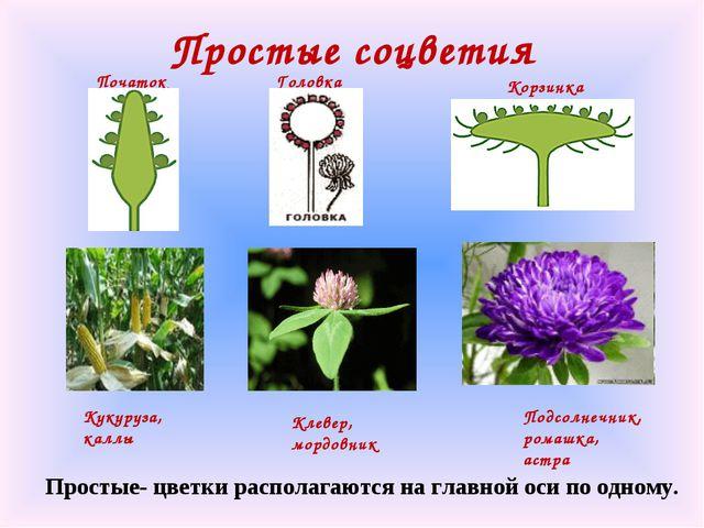 Простые соцветия Кукуруза, каллы Початок Подсолнечник, ромашка, астра Корзинк...