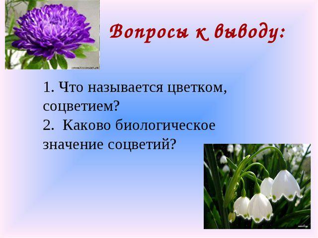Вопросы к выводу: 1. Что называется цветком, соцветием? 2. Каково биологическ...
