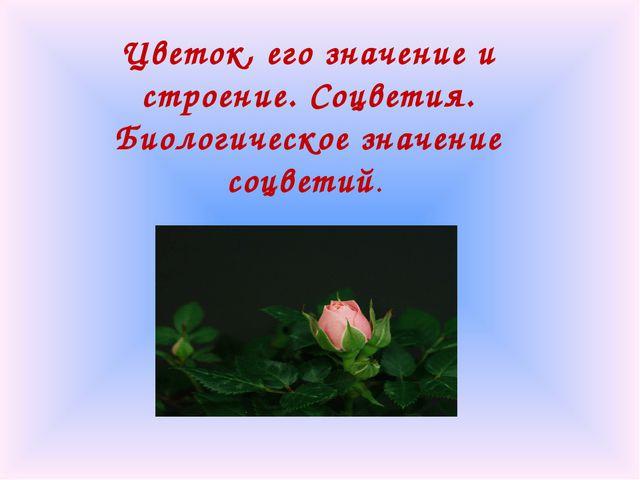 Цветок, его значение и строение. Соцветия. Биологическое значение соцветий.