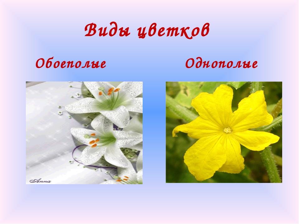 Виды цветков Обоеполые Однополые
