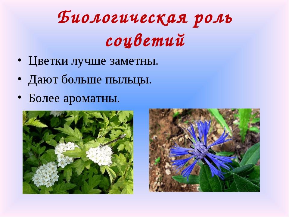 Биологическая роль соцветий Цветки лучше заметны. Дают больше пыльцы. Более а...