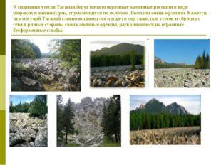 У подножия утесов Таганая берут начало огромные каменные россыпи в виде широк