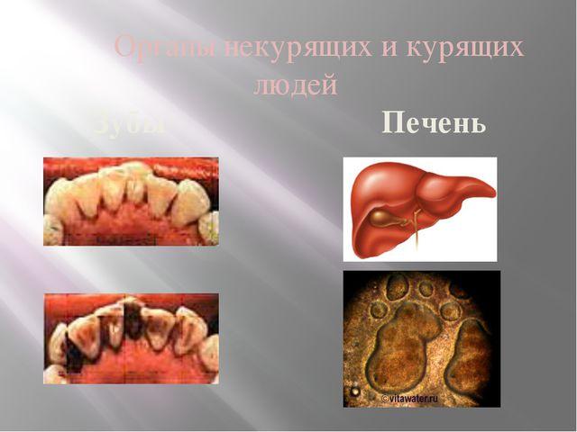 Органы некурящих и курящих людей Зубы Печень