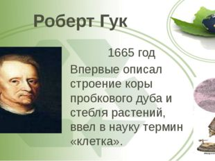 Роберт Гук 1665 год Впервые описал строение коры пробкового дуба и стебля рас