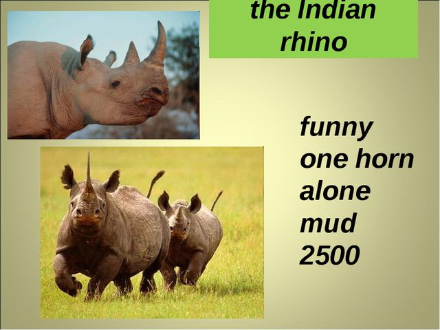 the Indian rhino funny one horn alone mud 2500