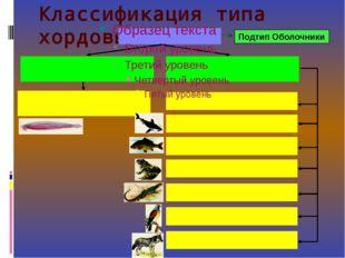 Классификация типа хордовые Подтип Оболочники