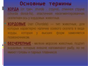 Основные термины ХОРДА (от греч. chordе - струна), спинная струна (chorda dor