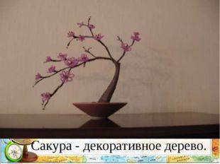 Сакура - декоративное дерево.