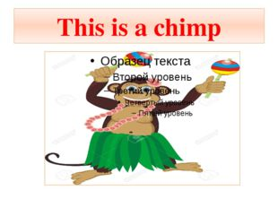 This is a chimp
