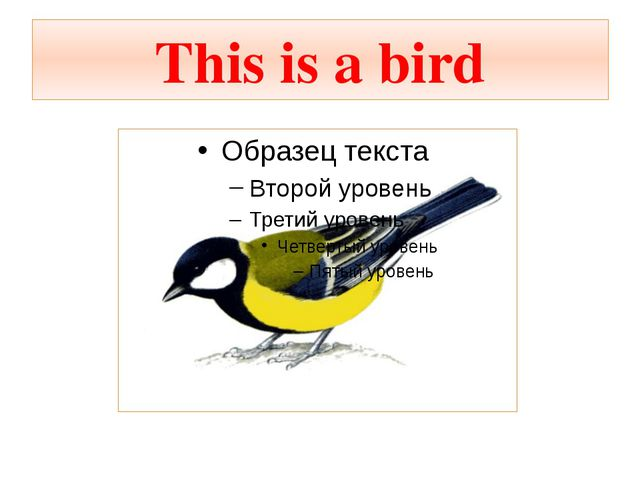 This is a bird