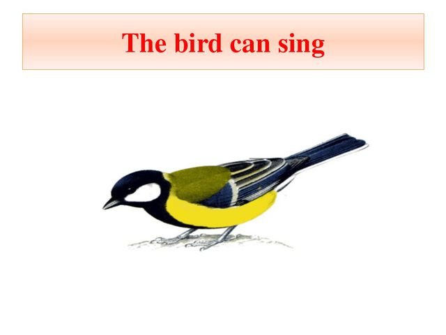 The bird can sing