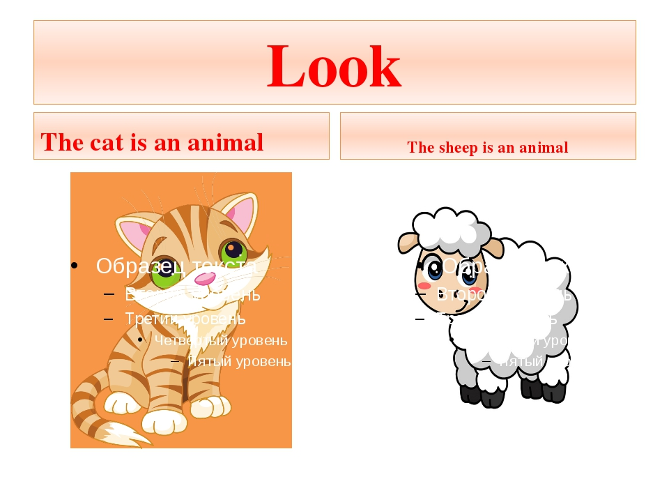 Look The cat is an animal The sheep is an animal