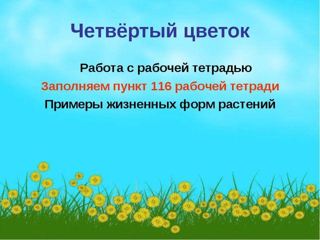 Четвёртый цветок Работа с рабочей тетрадью Заполняем пункт 116 рабочей тетрад...