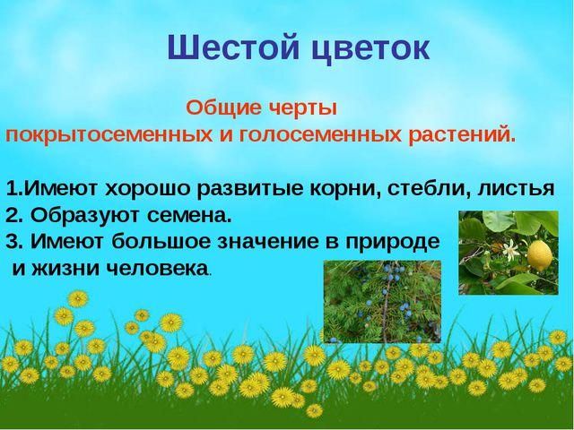 Шестой цветок Общие черты покрытосеменных и голосеменных растений. 1.Имеют х...