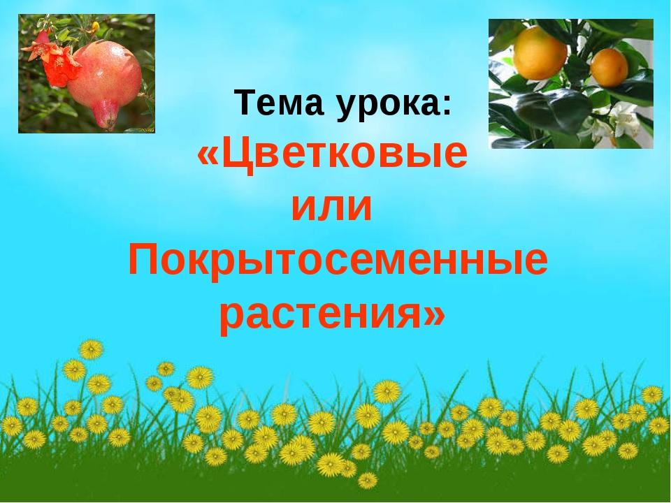 Тема урока: «Цветковые или Покрытосеменные растения»