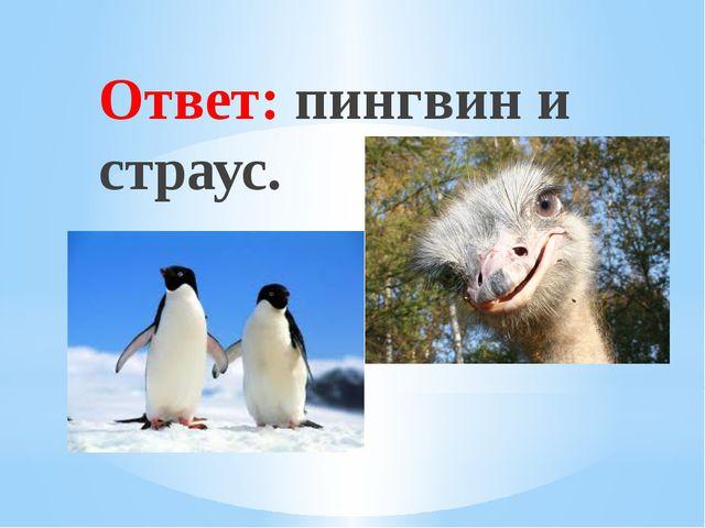 Ответ: пингвин и страус. Рахимова А.Е., МАОУ СОШ № 8
