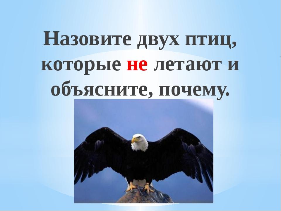 Назовите двух птиц, которые не летают и объясните, почему. Рахимова А.Е., МАО...