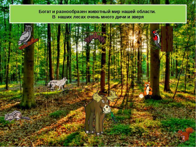 Богат и разнообразен животный мир нашей области.  В  наших лесах очень много...