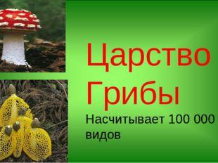 Царство Грибы Насчитывает 100 000 видов