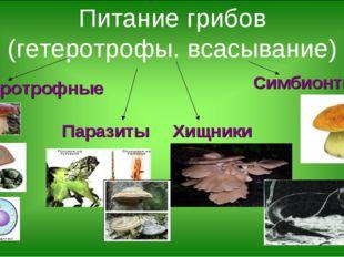 Питание грибов (гетеротрофы. всасывание) Сапротрофные Симбионты Паразиты Хищн