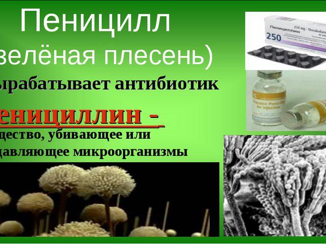 Пеницилл (зелёная плесень) Вырабатывает антибиотик пенициллин - вещество, уби...