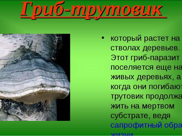 Гриб-трутовик который растет на стволах деревьев. Этот гриб-паразит поселяетс...