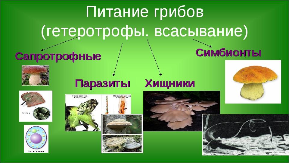 Питание грибов (гетеротрофы. всасывание) Сапротрофные Симбионты Паразиты Хищн...
