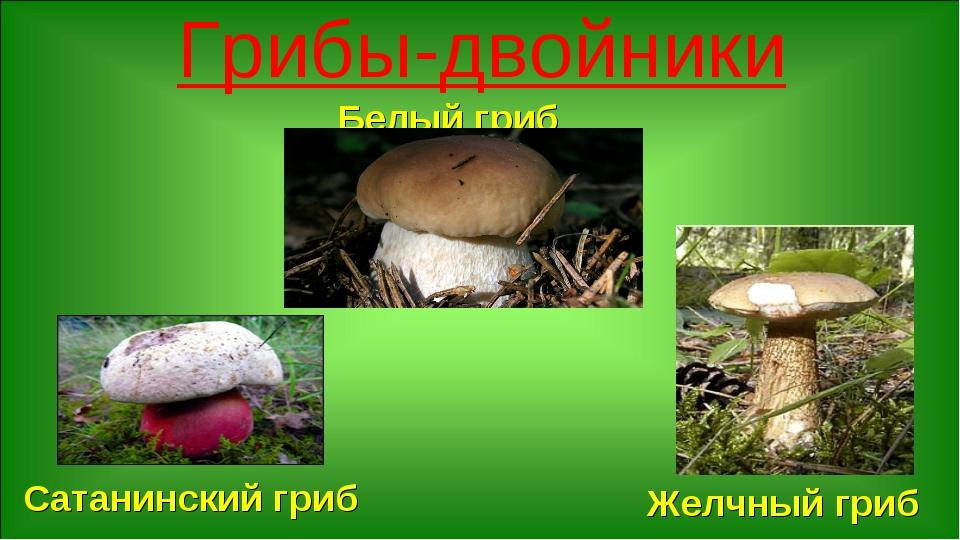 Грибы-двойники Белый гриб Сатанинский гриб Желчный гриб