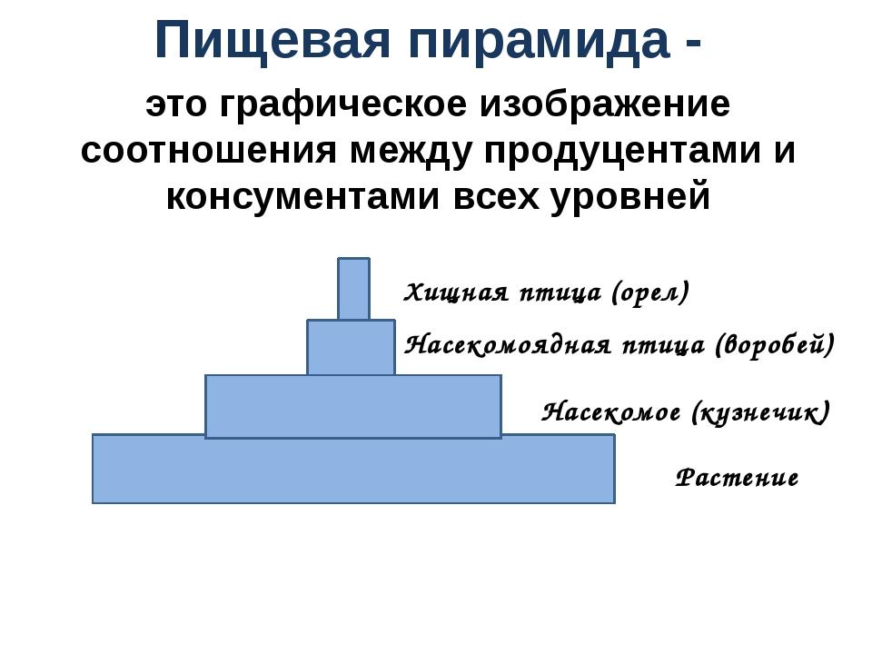 Пищевая пирамида - Растение Насекомое (кузнечик) Насекомоядная птица (воробей...