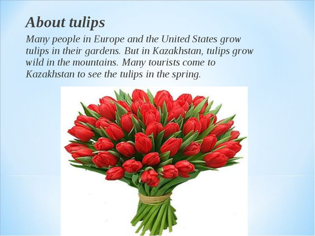 About tulips Many people in Europe and the United States grow tulips in their...