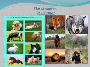 Показ картин Животные