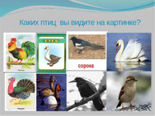 Каких птиц вы видите на картинке?