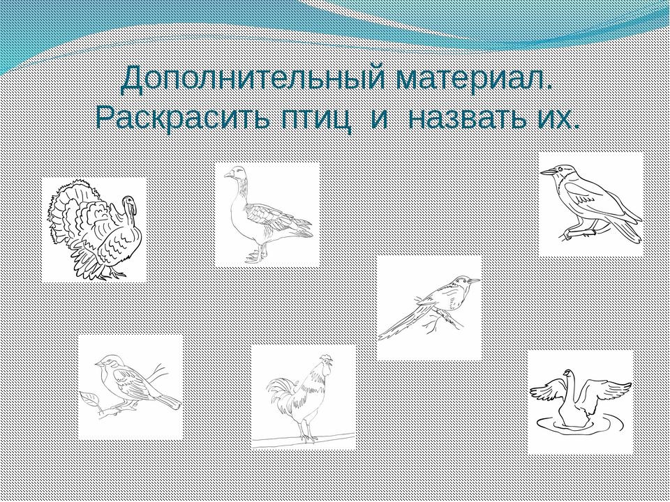 Дополнительный материал. Раскрасить птиц и назвать их.