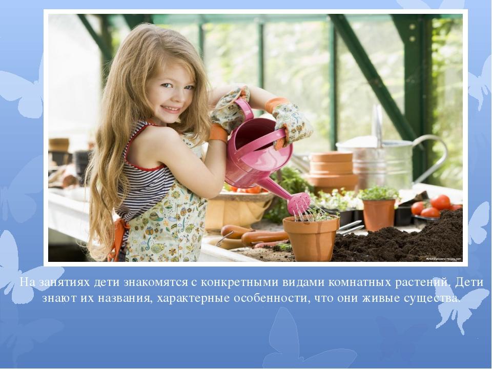 На занятиях дети знакомятся с конкретными видами комнатных растений. Дети зна...