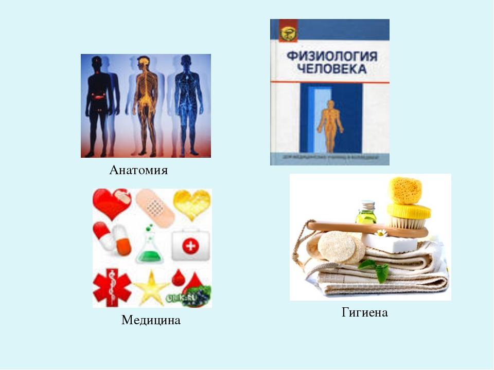 Анатомия Медицина Гигиена