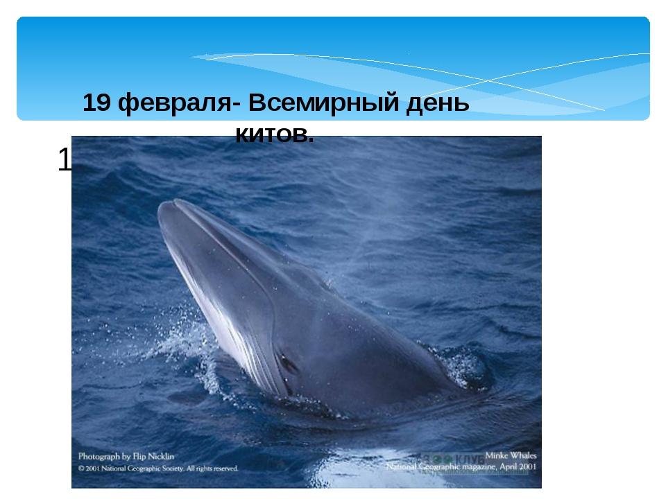 19 февраля- Всемирный день 19 февраля- Всемирный день китов.
